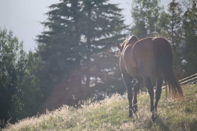 horses-tail