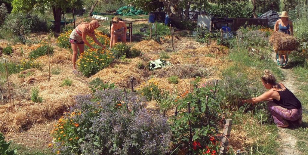 environment gardening